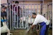تقاضای گوشت حلال، مسلمانان و کشاورزان مینه سوتا در آمریکا را نزدیک ساخت