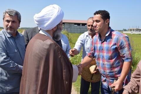 تصاویر/ کمک رسانی امام جمعه رشت به شالیکاران در دروی برنج