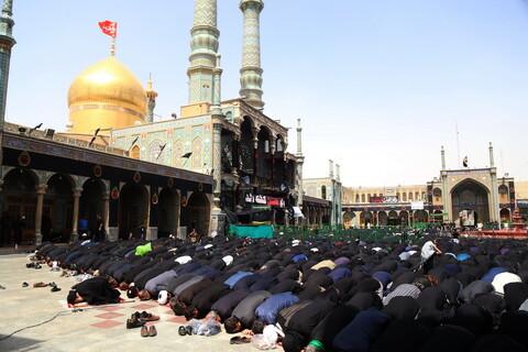 تصاویر/ اقامه نماز ظهر عاشورا به توسط آیت الله العظمی شبیری زنجانی
