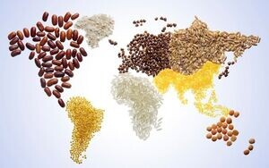 بحران گرسنگی عمیق تر شد/ ترامپ آتش جنگ تجاری را خاموش کرد