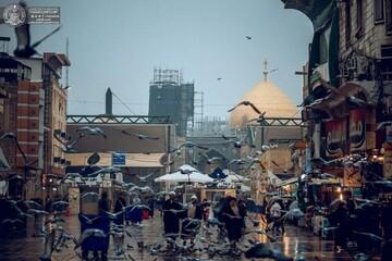 حال و هوای بارانی حرم حضرت امیر المومنین (ع) + تصاویر