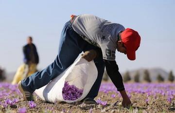 کشاورزان چگونه باید مالیات بدهند؟