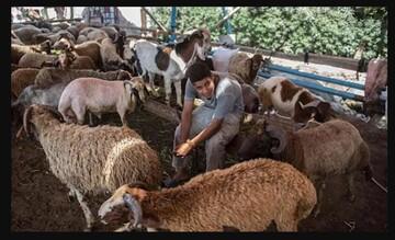 فتوای علمای حیدرآباد: مسلمانان میتوانند بهجای قربانی، به نیازمندان کمک کنند