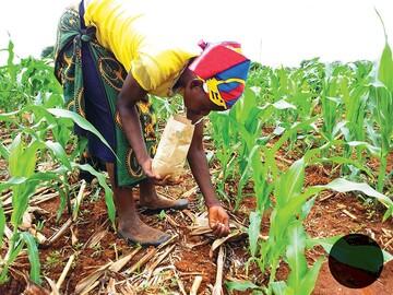 تولید کاکائو در آفریقا به روایت پرس تی وی