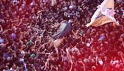 بالصور/ العتبتان المقدّستان الحسينيّة والعبّاسية تشهدان تشييعاً مهيباً لفقيد المنبر الحسينيّ السيد جاسم الطويرجاويّ