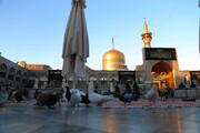 نماهنگ | «امام رضا(ع) قربون کبوترات» با صدای پویانفر