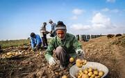 گلایه کشاورزان از وجود دلاّلاّن / مسئولان اقدامی جدی انجام دهند