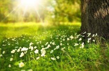 مقصود از جمله «آسمان و زمین را در شش روز آفریدیم» چیست؟