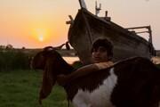 «یدو» رکورددار نامزدی بیشترین جوایزِ جشنواره فیلم فجر