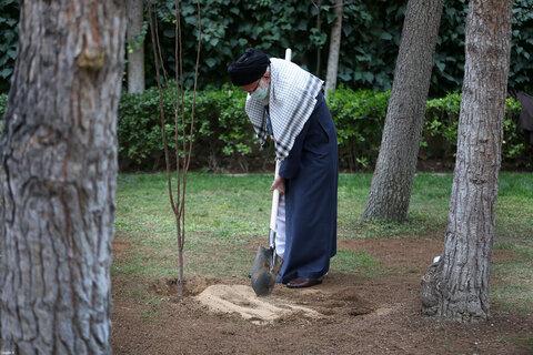 کاشت دو نهال میوه در روز درختکاری توسط رهبر معظم انقلاب