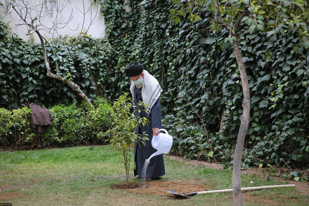 تصاویر/ کاشت دو نهال میوه در روز درختکاری توسط رهبر معظم انقلاب
