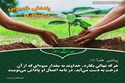 عکس نوشت   پاداش شیرین درختکاری