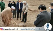 درختکاری به یاد شهدای مدافع سلامت قزوین