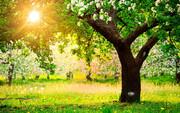 حفظ طبیعت بر همه واجب است