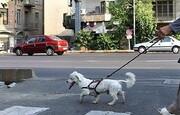 احکام شرعی | نظر رهبر معظم انقلاب درباره سگ گردانی در معابر و بوستان ها