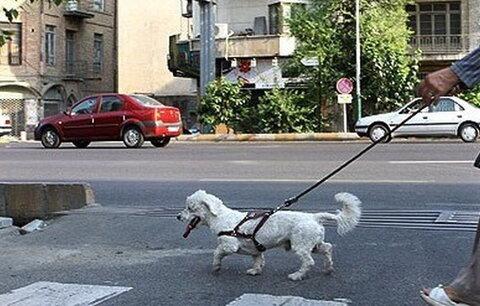احکام شرعی | حکم سگ گردانی در معابر و بوستان ها