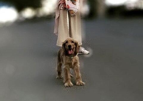 پاسخ آیت الله العظمی مکارم شیرازی به استفتائی پیرامون سگ گردانی