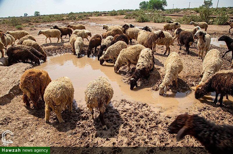 فاجعه بزرگی حال رخ دادن است || ١٥ روز است که برخی روستاها آب شرب ندارند