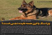 عکس نوشت | چرا سگ با این همه فایده نجس است؟