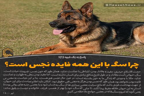 عکس نوشت   چرا سگ با این همه فایده نجس است؟
