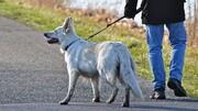 با سگ گردانی در اماکن عمومی برخورد شود
