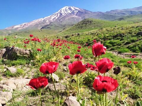 فیلم | صعود  طلاب و روحانیون باشگاه کوهنوردی عالیان به بام  ایران قله دماوند در دهه ولایت