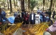 امام جمعه بوشهر از نخلستان های بوشکان بازدید کرد