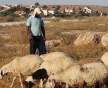 Israeli colonialist settlers attack shepherds in northern plains