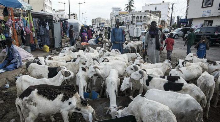 تصاویری از مراسم قربانی کشورهای عربی در روز عید قربان