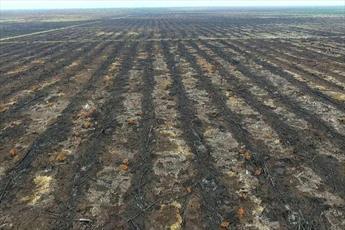 15 درصد آتش سوزی جنگل ها عمدی است