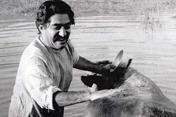 گاو؛ فیلمی که سینمای ایران را نجات داد