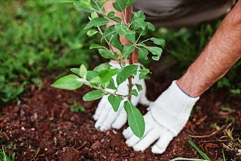 اهمیت درختکاری در کلام معصومین (ع)