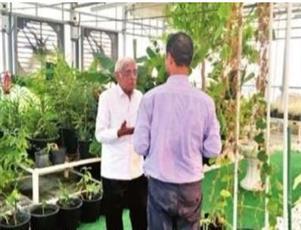 «گیاهان قرآنی» طبق تحقیق دانشمند مسلمان در خاورمیانه کاشته میشوند