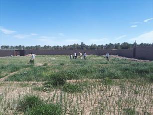 فراهم سازی بستر اجرای طرح های کشاورزی تولیدی  طلاب مدرسه شهداد