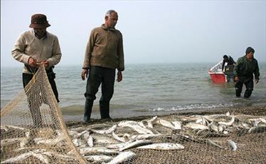 حکم ماهی های مرده در تور صیاد