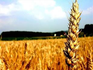 روستاییان آذربایجان شرقی امسال ۲۰۰ میلیارد ریال زکات می دهند