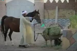 فیلم/ فعالیت های متفاوت روحانی مستقر روستای قاسم آباد رفسنجان