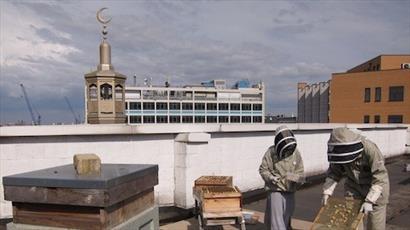 مسلمانان بر روی پشت بام مسجدی در لندن، زنبور عسل پرورش می دهند