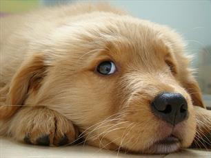 احکام شرعی | حکم خرید و فروش سگ
