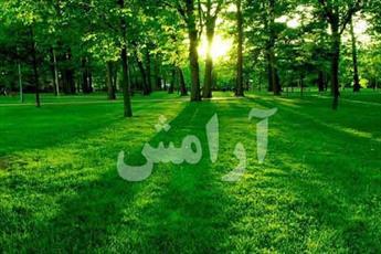 راهکارهای قرآن برای آرامش انسان