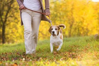 حکم خرید و فروش و نگهداری سگ در انظار عمومی