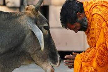 هندوهای تندرو، فروشندگان گوشت را وادار به تعطیلی مغازه هایشان کردند