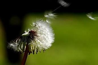 حدیث روز | عملت را اینگونه خالص کن
